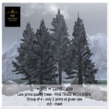 Snow pine trees group of 4
