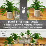 tms plant in vintage crock _AD_