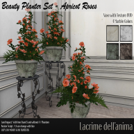 (PIC) Beauty Planter Set - Apricot Roses