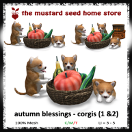 tms-autumn-blessings-_-corgis-1 & 2 AD