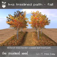 tms-treelined-path---fall-autumn